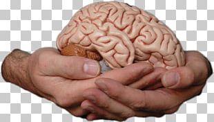 Human Brain Homo Sapiens Memory Consciousness PNG