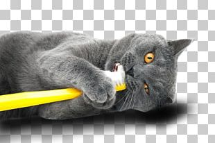 Dog Cat Oral Hygiene Teeth Cleaning Veterinary Dentistry PNG
