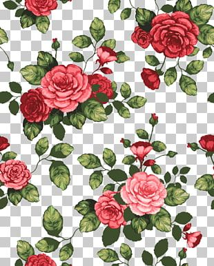 Garden Roses Cabbage Rose Floribunda Flower Drawing PNG