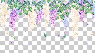 Viola Mandshurica Violet Drawing PNG
