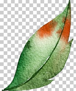 Watercolor Painting Leaf Green PNG