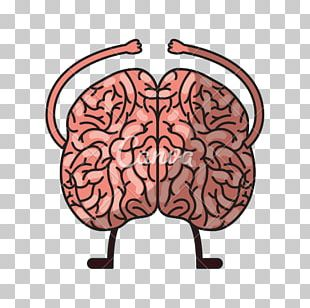 Human Brain Homo Sapiens Agy PNG