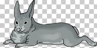 Domestic Rabbit Whiskers Netherland Dwarf Rabbit PNG