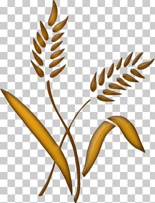 Ear Wheat Aartje Flower Rye Bread PNG