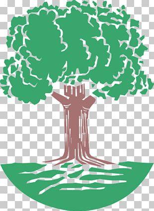 Oak Tree PNG