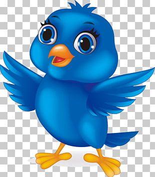 Bird Cartoon Stock Illustration PNG