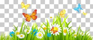 Flower Free Content Spring PNG