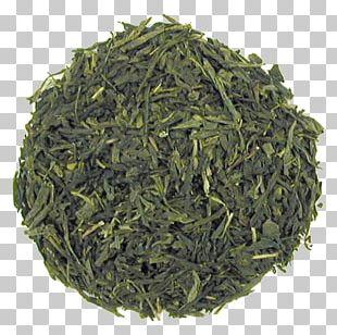 Sencha Green Tea White Tea Japanese Cuisine PNG