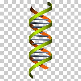 Science Genetics Euclidean DNA Illustration PNG