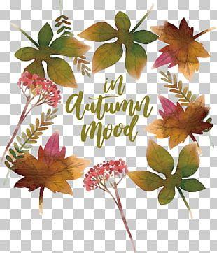 Autumn Leaf Watercolor Painting Deciduous PNG
