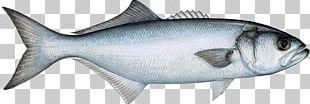 Bluefish Fishing Fish Market Pelagic Fish PNG
