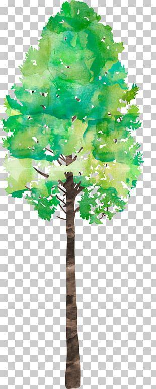 Pine Family Leaf Plant Stem PNG