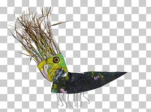 Beak Feather Tail PNG