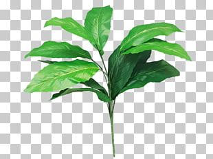 Leaf Plant Stem Tree Shrub PNG