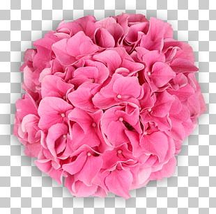 Garden Roses Cabbage Rose Hydrangea Cut Flowers PNG