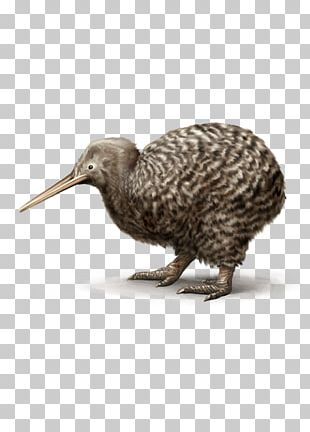 Flightless Bird Lovebird Beak Great Spotted Kiwi PNG