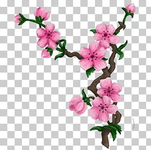 Cherry Blossom Drawing Art PNG