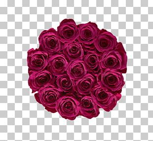 Garden Roses Raspberry Pi Fruit Berries PNG