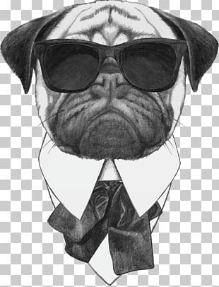 Pug Stock Photography Sunglasses Stock Illustration PNG