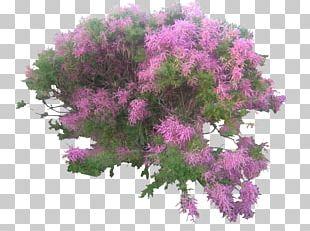 Shrub Garden Kamchatka Honeysuckle Japanese Laurel Tree PNG