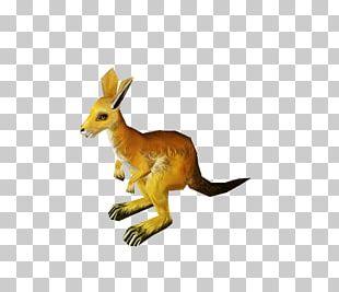 Kangaroo Macropodidae Red Fox Tail Animal PNG