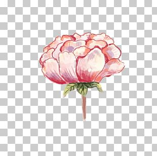 Watercolor: Flowers Watercolor Painting Peony PNG