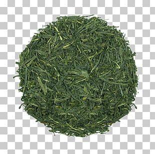 Gyokuro Endive Nilgiri Tea Sencha Bancha PNG