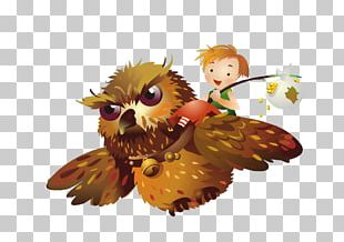 Owl Photography Illustration PNG