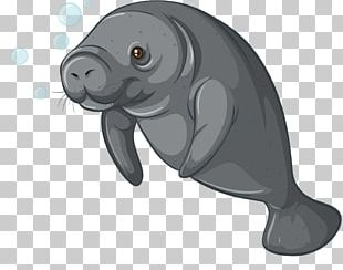 Sea Cows Steller's Sea Cow Dugong PNG