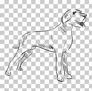 Dog Breed Drawing Line Art PNG