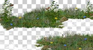 Grass Shrub Lawn PNG