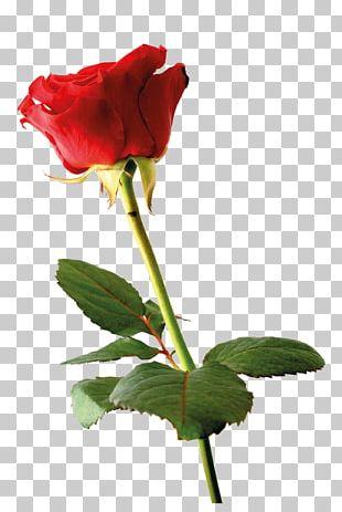 Wedding Invitation Rose Greeting Card Flower Petal PNG