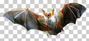 Vampire Bat PNG