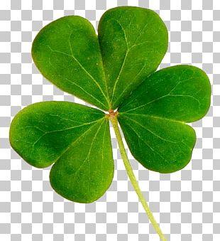 Shamrock Republic Of Ireland Saint Patrick's Day United States Clover PNG