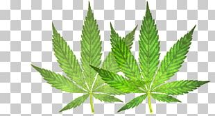 Medical Cannabis Leaf 420 Day Smoking PNG
