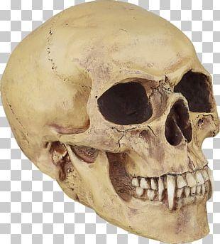 Human Skull Symbolism Bone Vampire Tooth PNG