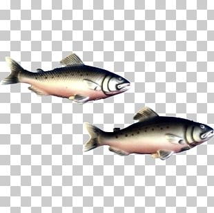 Trout Herring Oily Fish Salt PNG