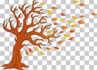 Autumn Tree Cartoon PNG
