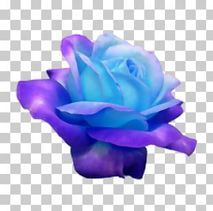 Blue Rose Flower Rosaceae PNG
