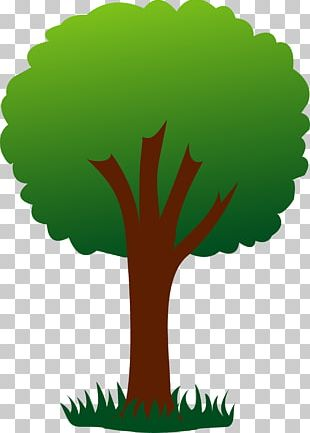 Tree Free Content Drawing PNG