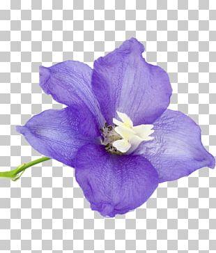 Birth Flower Larkspur Flower Bouquet Birthstone PNG