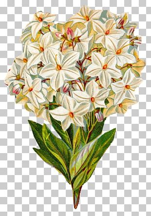 Flower Watercolor Painting Hydrangea PNG