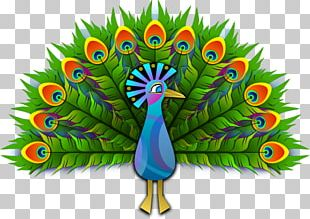 Peafowl Free Content PNG