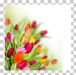Tulip Butterfly Flower Bouquet Floral Design PNG