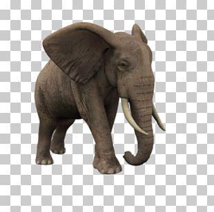 African Elephant Animaatio PNG