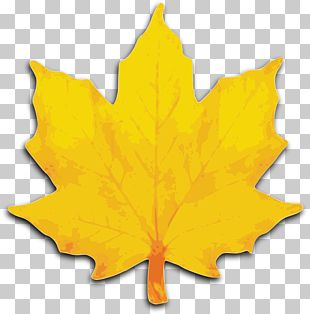 Autumn Leaf Color Yellow Maple Leaf PNG