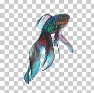 Fantail Black Telescope Koi Siamese Fighting Fish PNG