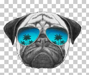 Pug T-shirt Sunglasses Dog Collar PNG