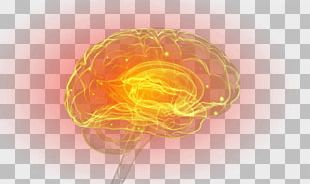 Amygdala Brain Therapy Cell Neuron PNG