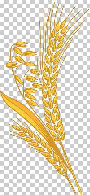 Grain PNG